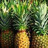 Pineapple-sm